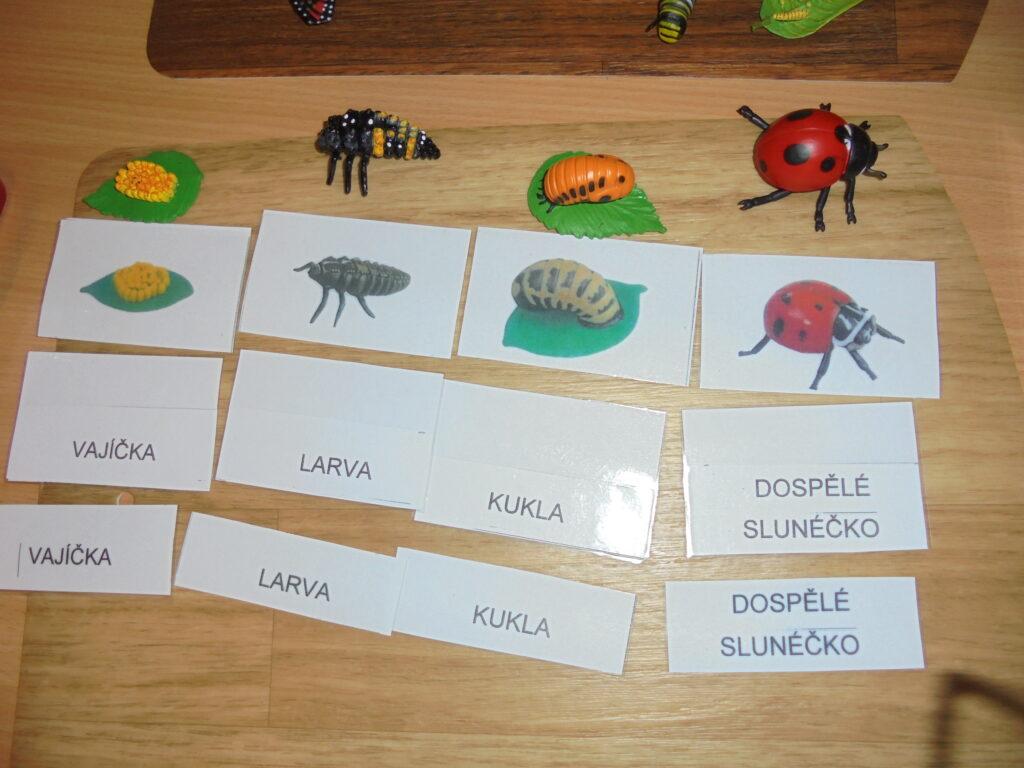 Vývoj - montessori učení